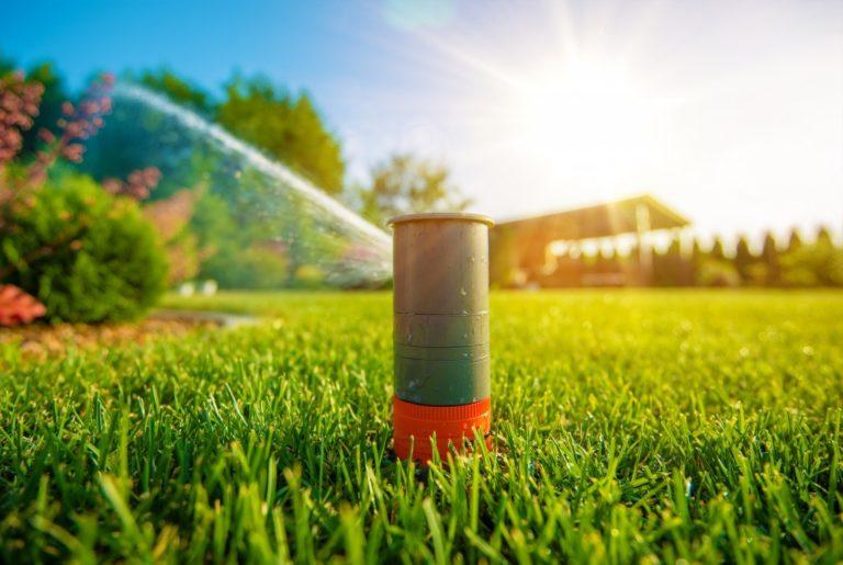 hose in the garden