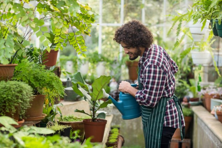 man in the greenhouse